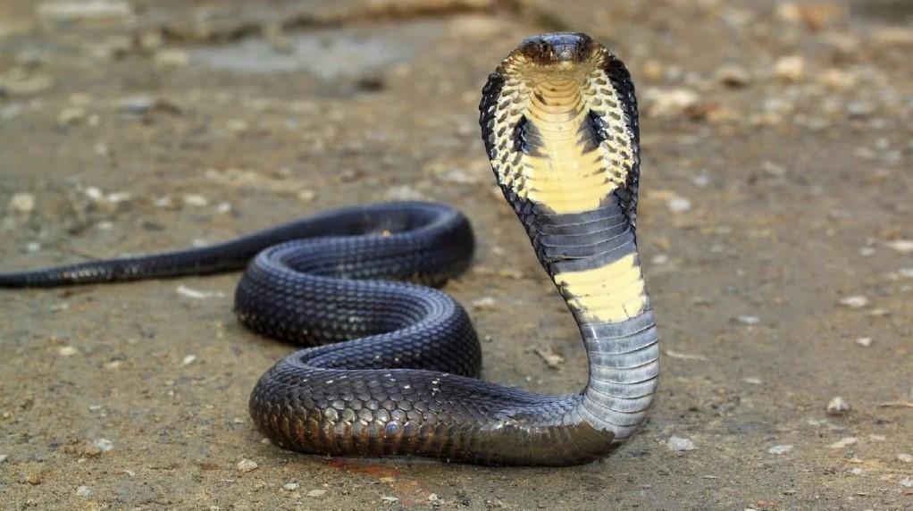 Топ-15 самых ядовитых змей в мире и их описания